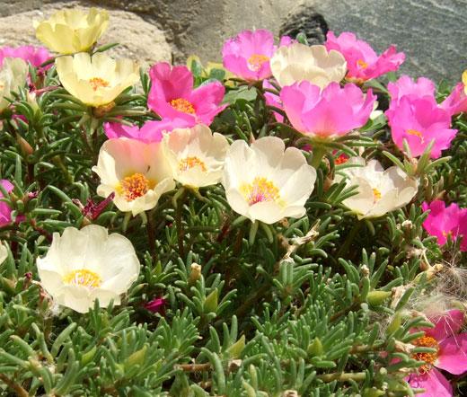 Image Result For Irish Garden Flowers