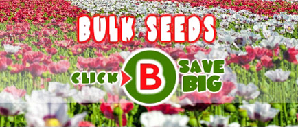Seed Empire Bulk Seeds