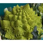 Broccoli Romanesco Seeds - Brassica Oleracea