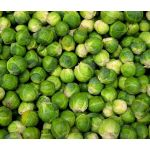 Brussels Sprouts Long Island Seeds - Brassica Oleracea