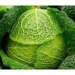 Cabbage Savoy Perfection Seeds - Brassica Oleracea
