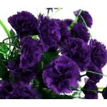 Carnation Grenadin King of Blacks Seeds - Dianthus Caryophyllus
