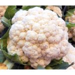 Cauliflower Snow Ball Seeds - Brassica Oleracea