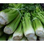 Celery Utah 52-70 Seeds - Apium Graveolens