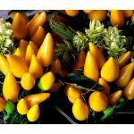 Chili Pepper Ornamental Goldfinger Seeds - Capsicum Annuum