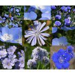 Wildflower Mix Blue Seeds