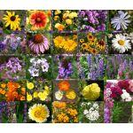 Wildflower Mix Cascade Perennial Seeds
