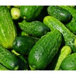 Cucumber Boston Seeds - Cucumis Sativus