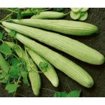Cucumber Burpless Armenian Yard Long Seeds - Cucumis Sativus