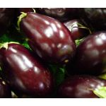 Eggplant Black Beauty Seeds - Solanum Melongena