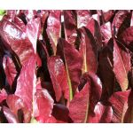 Lettuce Romaine Cimmaron Red Seeds - Lactuca Sativa