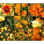 Wildflower Mix Orange Seeds