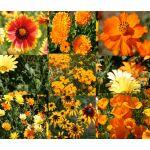 Wildflower Mix Orange Seeds