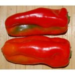 Pepper Sweet Red Marconi Seeds - Capsicum Annuum