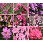 Wildflower Mix Pink Seeds