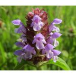 Prunella Self Heal Common Seeds - Prunella Vulgaris