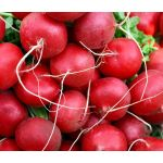 Radish Champion Seeds - Raphanus Sativus