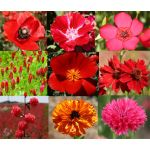 Wildflower Mix Red Seeds