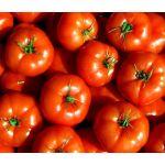 Tomato Marglobe Supreme Lycopersicon Esculentum Seeds