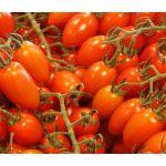 Tomato Roma Plum VFN Lycopersicon Esculentum Seeds
