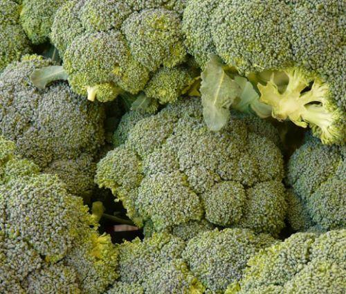 Broccoli  Waltham 29 Seeds - Brassica Oleracea