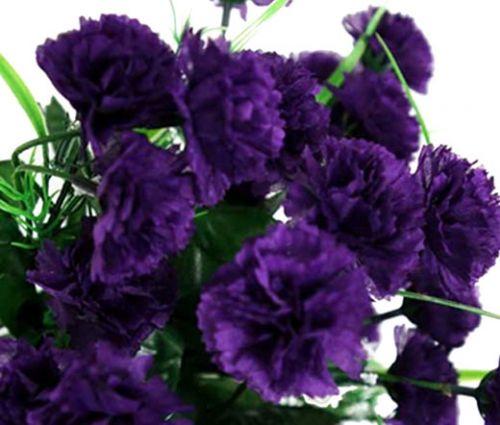 Carnation Grenadin King of Blacks Seeds - Dianthus Caryophyllus