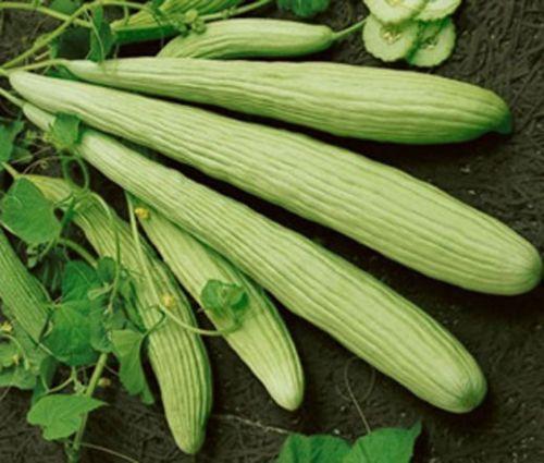 Cucumber Burpless Armenian Yard Long Seeds - Cucumis Sativus