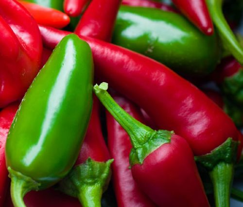 Pepper Hot Early Jalapeno Seeds - Capsicum Annuum