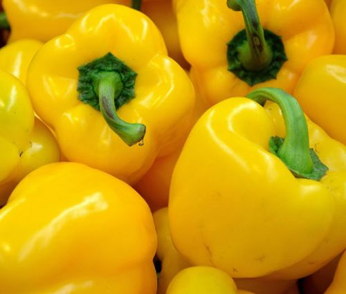 Pepper Sweet Golden California Wonder Seeds - Capsicum Annuum