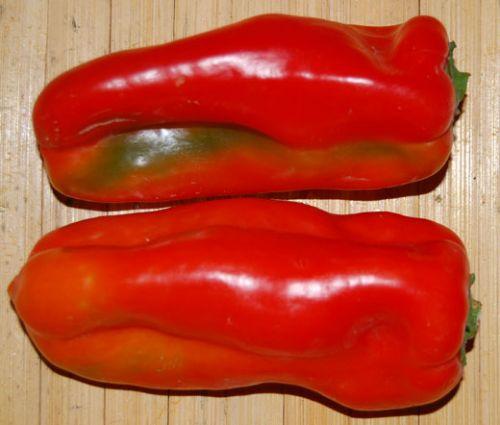 Pepper Sweet Red Marconi Seeds - Capsicum Annuum