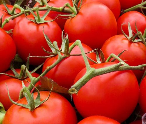 Tomato Large Red Cherry Lycopersicon Esculentum Seeds